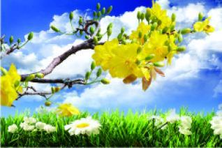 Những ngày xuân lạ (Kai Hoàng)