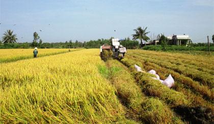 Nông dân xã Long Bình thu hoạch lúa.