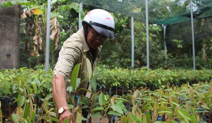 Người dân chọn mua cây giống.