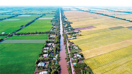 Cánh đồng lúa ở huyện cái Bè. Ảnh: Hải Sơn
